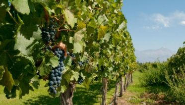 Full Day Wine Tasting including lunch from Mendoza
