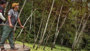 G Lodge Amazon - 5 Day Independent Adventure