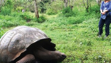 Galapagos & Inca Trail Adventure
