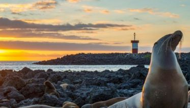 Galápagos – Central and Eastern Islands aboard the Reina Silvia Voyager (Cruise Only)