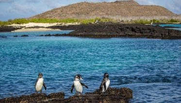 Galápagos – Central and Eastern Islands aboard the Reina Silvia Voyager