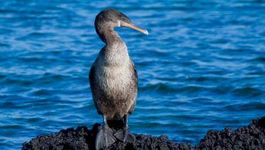 Galapagos Encounter - Archipel I (Itinerary A)