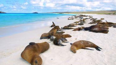 Galapagos Encounter - Archipel I (Itinerary B)