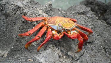 Galapagos Encounter - Archipel I (Itinerary D)