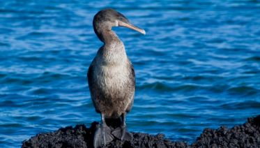 Galapagos Encounter - Archipel II (Itinerary A)