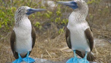Galapagos Encounter - Archipel II (Itinerary D)
