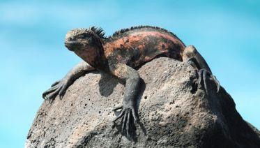 Galapagos Escapade - Nemo III (Itinerary B)