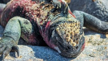 Galapagos Expedition Cruise South