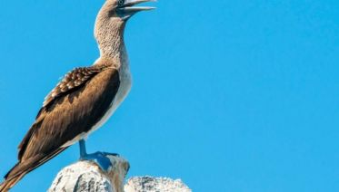 Galápagos – Western and Central Islands aboard the Reina Silvia Voyager (Cruise Only)
