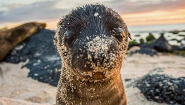 Galápagos – Western and Central Islands aboard the Reina Silvia Voyager