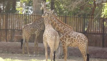 GIZA ZOO AND WILDLIFE TOUR IN CAIRO