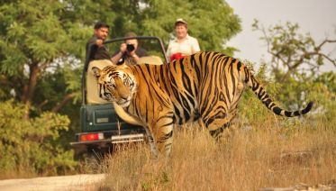 Golden Triangle India Tour With Wildlife