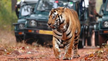 Golden Triangle with Ranthambore and Varanasi