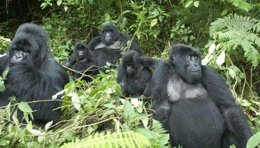 Gorilla trekking and wildlife safari expedition