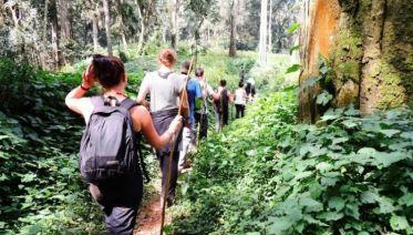 Gorillas & Chimps Safari 5D/4N