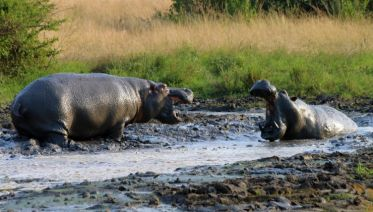 Gorillas & Masai Mara - Camping