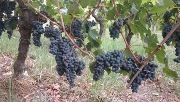 Gourmet Bordeaux Day Trip from Paris with Wine Tastings