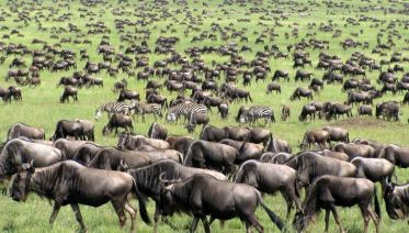 Great Migration Route-10 Days