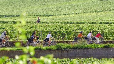 Guided Bike and Wine Tour in Burgundy