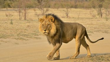 Half-Day Safari Private Tour