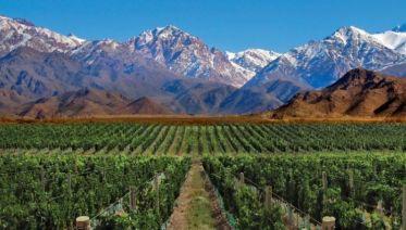 Half Day Wine Tasting from Mendoza