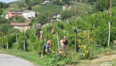 Headwater - Cycling the Wine Villages of Piedmont, Self-Guided