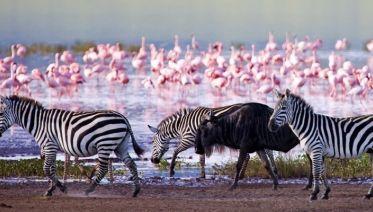 Hell's Gate, L. Naivasha, L. Nakuru and Masai Mara Safari