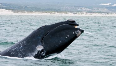 Hermanus Whale Watching & Private Wine Tasting