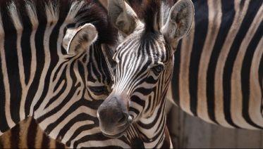 Hidden Tanzania Custom Safari