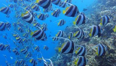 Highlights of Sri Lanka + Maldive Dhoni Cruise