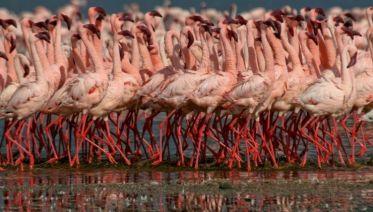 Highlights Of Tanzania Safari 4D/3N (Lake Manyara, Serengeti & Ngorongoro)