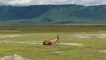 Highlights Of Tanzania Safari 5D/4N (Lake Manyara, Serengeti & Ngorongoro)