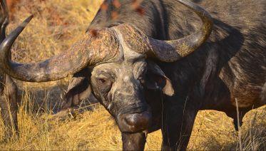 Hluhluwe Imfolozi Safari & DumaZulu Cultural Village Tour