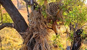 Hluhluwe Imfolozi Safari & Emdoneni Wild Cat Private Tour