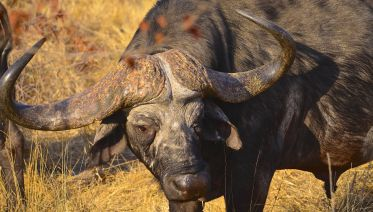 Hluhluwe Imfolozi Safari Private Tour