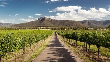 Hunter Valley Wine Experience