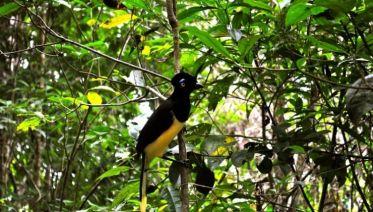 Iguazu Forest Tour