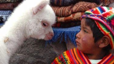 Inca Explorer From La Paz