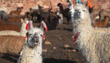 Incas, Gauchos & Uruguay with Carnival