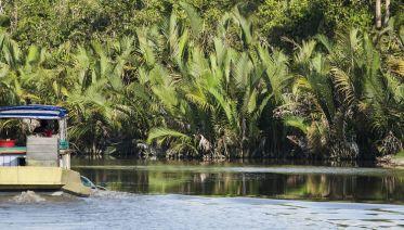 Indonesia Expedition: Orangutans of Kalimantan