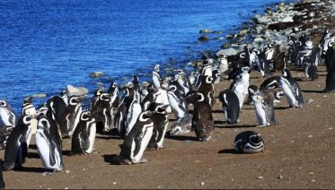Isla Magdalena's Penguins Colony Tour