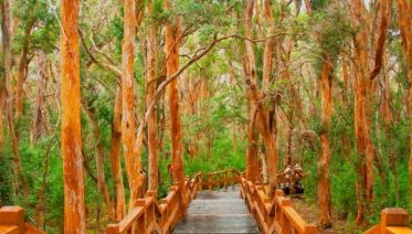 Isla Victoria & Arrayanes Forest
