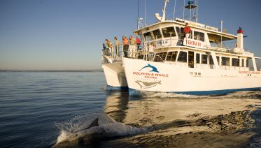 Jervis Bay Dolphin Watching Day Trip