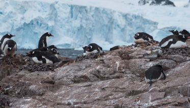 Jewels of Antarctica 12 days from Ushuaia