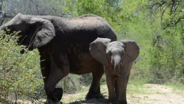 Johannesburg & Kruger National Park 7D/6N