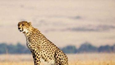 Kenya & Tanzania Adventure-Accommodated