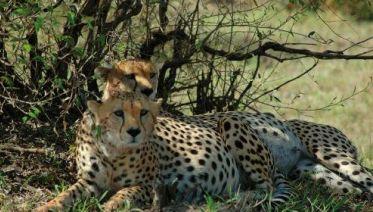 Kenya and Tanzania Safari in Comfort