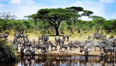 Kifaru Safari, Serena Lodges - Private Tour