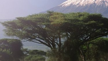 Kilimanjaro Expedition Via The Lemosho Route