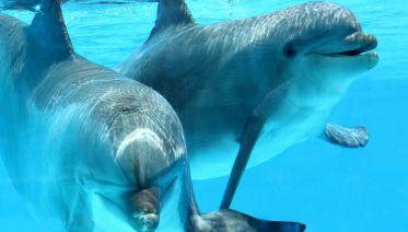 Kizimkazi Dolphin Tour